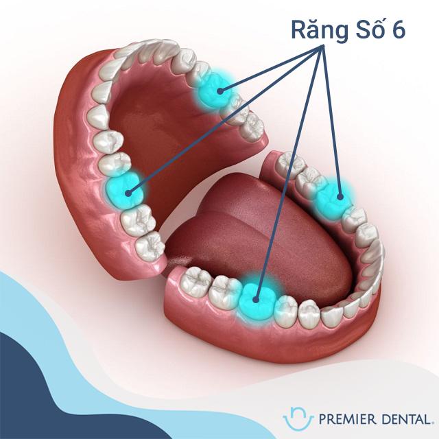 Răng Số 6 là răng nào?